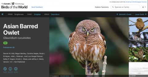 A screenshot of the Birds of the World platform.
